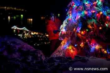 Vancouver man decorates five-metre tree on Mount Seymour - North Shore News