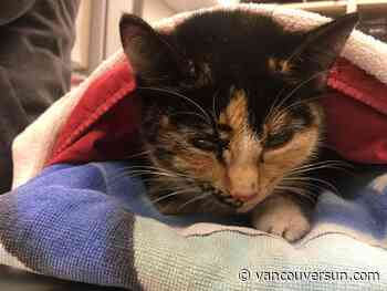 Cat frozen to northern B.C. road and run over will survive