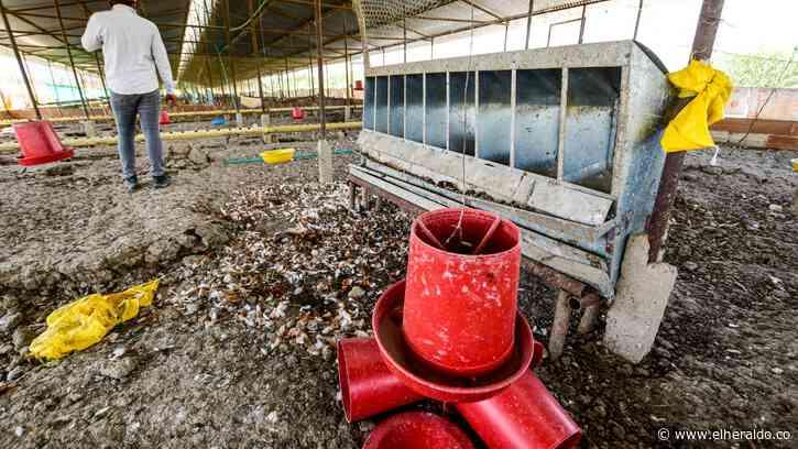 El problema que 'pusieron' las gallinas de Repelón - EL HERALDO