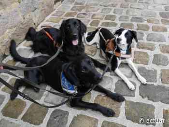 Nangis. Avec ses galettes, la boulangerie Odic soutient l'association des chiens guides d'aveugles - actu.fr