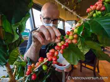 East Vancouver coffee shop growing its own coffee right on the premises