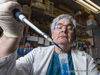 COVID-19: B.C. researchers continue work on treatments outside limelight of vaccine developments