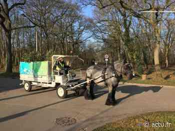 Yvelines. A Rennemoulin, Noisy-le-Roi et Bailly, une calèche ramassera les sapins de Noël - actu.fr