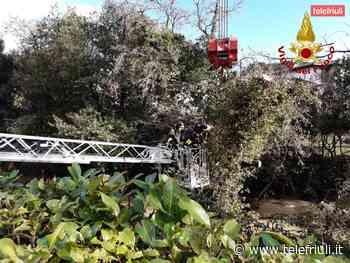 A Cervignano del Friuli gli alberi cadono nel fiume bloccano il corso dell'Ausa - Telefriuli