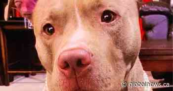 Man arrested after dog named Nina 'forcefully' taken from woman walking on Whitby street