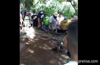 Sorprenden a 30 personas en gallera clandestina en Natá durante cuarentena total - La Prensa Panamá