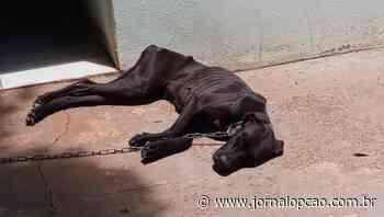 Mulher é presa em flagrante por maus-tratos a cadela, em Jatai - Jornal Opção