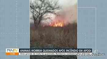 Animais morrem queimados em incêndio florestal em Apodi, RN - G1