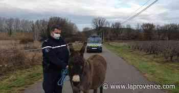 Cadenet : un âne récupéré par les gendarmes qui recherchent son propriétaire - La Provence