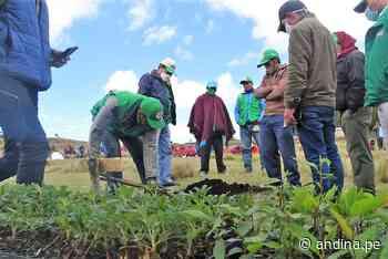 Lambayeque: con 300000 plantones reforestarán zonas altoandinas de Ferreñafe - Agencia Andina