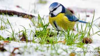 Große Mitmachaktion beginnt: Nabu ruft zur Zählung von Wintervögeln auf