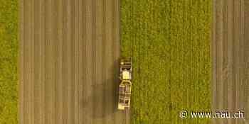 Bauernverband: Konsument entscheidet über Umweltverträglichkeit - Nau.ch