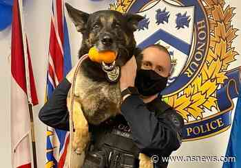 West Vancouver police dog Ranger retires after 7 years of sniffing out bad guys - North Shore News
