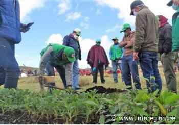 Lambayeque: Reforestarán zonas altoandinas de Ferreñafe - INFOREGION