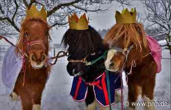 Die Ponys aus dem Morgenland - Trostberg - Passauer Neue Presse