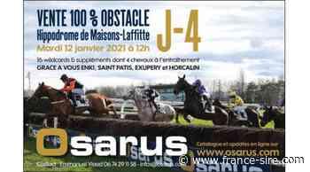J-4 avant la vente 100% obstacle d'Osarus à Maisons-Laffitte - France-sire