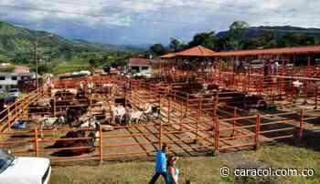 En Oiba denuncian que harán mercado ganadero en medio del Covid-19 - Caracol Radio