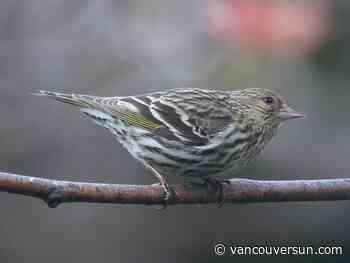 Deaths of tiny songbirds linked to salmonella in feeders