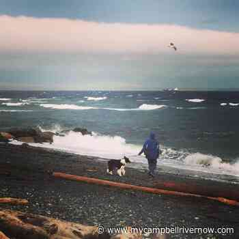 North Vancouver Island hit with another wind warning - My Campbell River Now