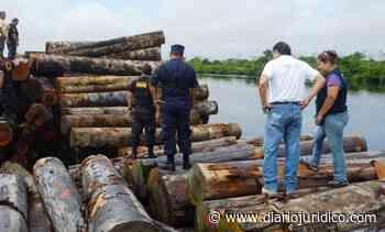 México – Impedir importación de madera proveniente de tala ilegal - diariojurídico.com