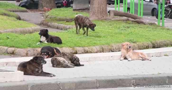 """Napoli, una decina di cani randagi trasformano i giardini di piazza Vittorio nella loro """"residenza"""" – Video"""