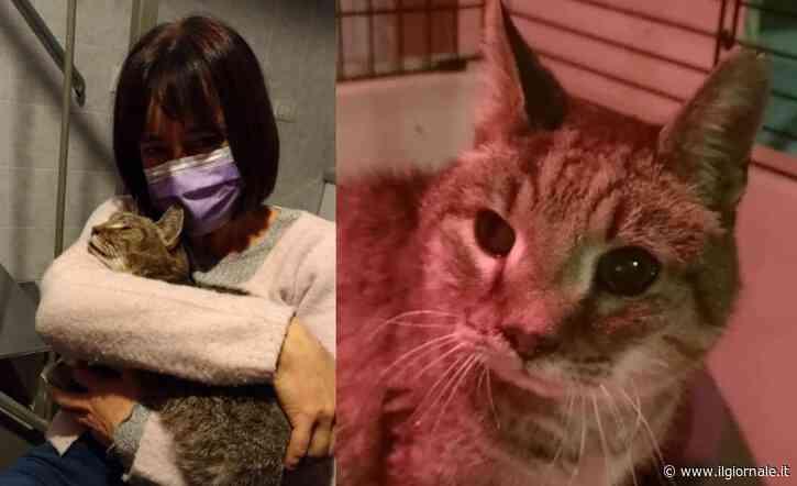 La padrona ritrova il gatto a otto anni dalla scomparsa. Il commovente incontro