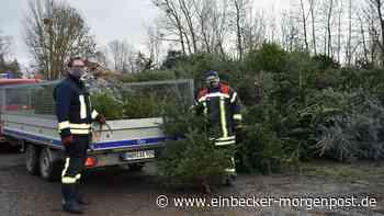 Feuerwehren sammelten in Dassel und Markoldendorf Weihnachtsbäume ein - Einbecker Morgenpost