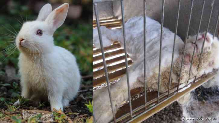 Great News for Rabbits! American Vintage Bans Angora