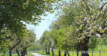 Bald blühen in Gusenburg noch mehr Obstbäume - Trierischer Volksfreund