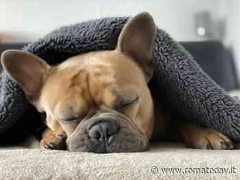 Le razze di cani che soffrono il freddo