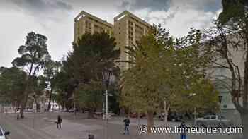 Vecinos enojados por la tala de un antiguo árbol sobre la Avenida Argentina - LM Neuquén