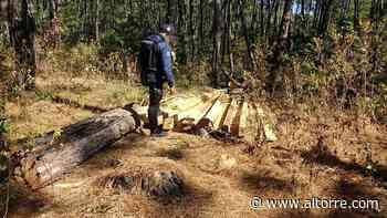 Detiene SSP a uno por su posible relación en tala clandestina, en Tocumbo - Altorre