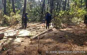 Detiene SSP a uno por su posible relación en tala clandestina - Quadratín - Quadratín Michoacán