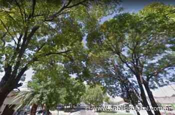 Vecinos de Paraná resisten la tala de árboles de calle Racedo - Análisis Digital