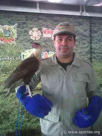 La cacería y tala enemigos de las aves del parque del oeste Francisco Tamayo - Aporrea