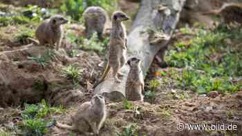 Drei Mio. Euro Verlust: Wie sieht die Zoo-Zukunft in Köln aus? - BILD