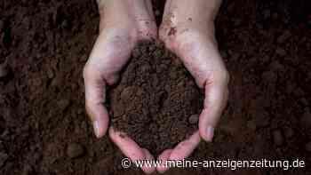 Torfersatz: Diese umweltfreundlichen Möglichkeiten haben Sie beim Gärtnern
