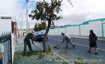 El Plan de Regeneración inició en áreas verdes de Latacunga - Diario Los Andes