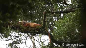 Neue Studie rechnet vor: Schutz des Regenwaldes spart Geld
