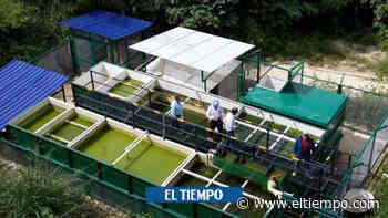 Inauguran centro de protección de fauna silvestre más grande del país - ElTiempo.com