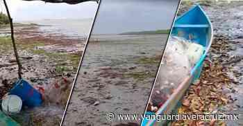 (Video) Alarma el retiro del agua de las costas, en Alvarado - Vanguardia de Veracruz