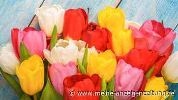 Tulpen als Deko: Kreative Ideen mit bunten Blumen