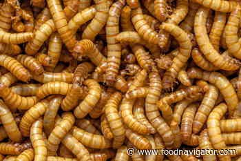 EFSA says mealworms safe for human consumption: 'An important milestone towards commercialisation'