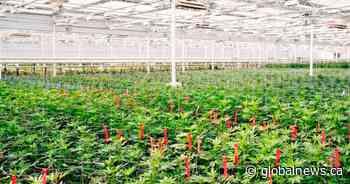 Aphria CEO eyes U.S. cannabis legalization as Biden prepares to take office