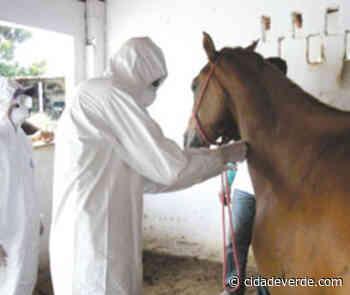 Piauí confirma primeiro caso de Febre do Nilo em cavalos - Parnaiba - Cidadeverde.com