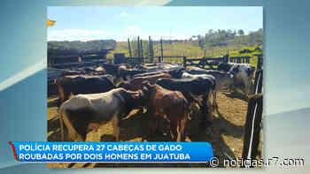 Polícia recupera 27 cabeças de gado roubadas em Juatuba (MG) - HORA 7