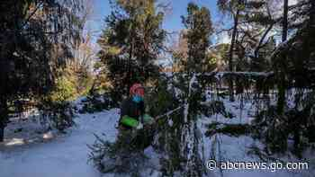 Madrid digs way out of post-storm garbage, damaged trees