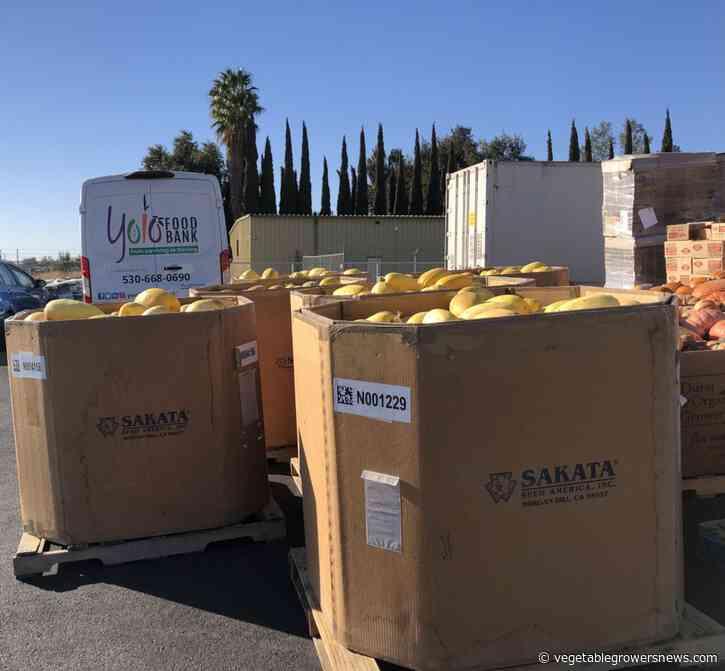 Sakata Seed America increases food donations to Yolo Food Bank