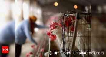 Bird flu scare: Vistara, IndiGo stop chicken, egg dishes on select routes