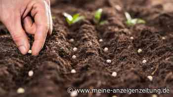 Saatgut testen: So erkennen Sie, ob Ihre Sämereien noch verwendbar sind